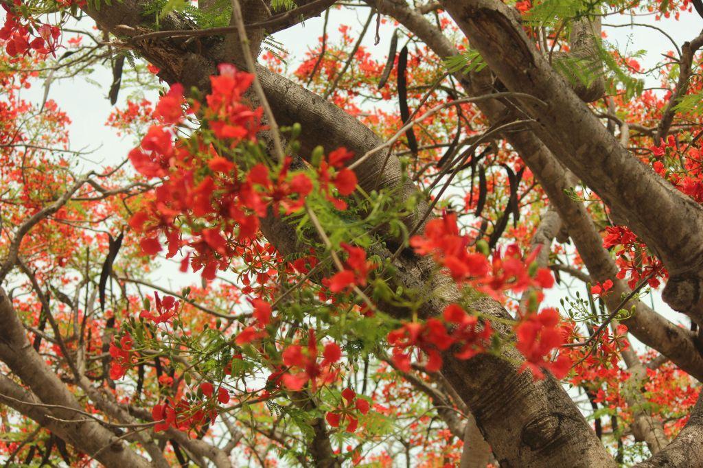 Flowers enroute to Bandipura National Park