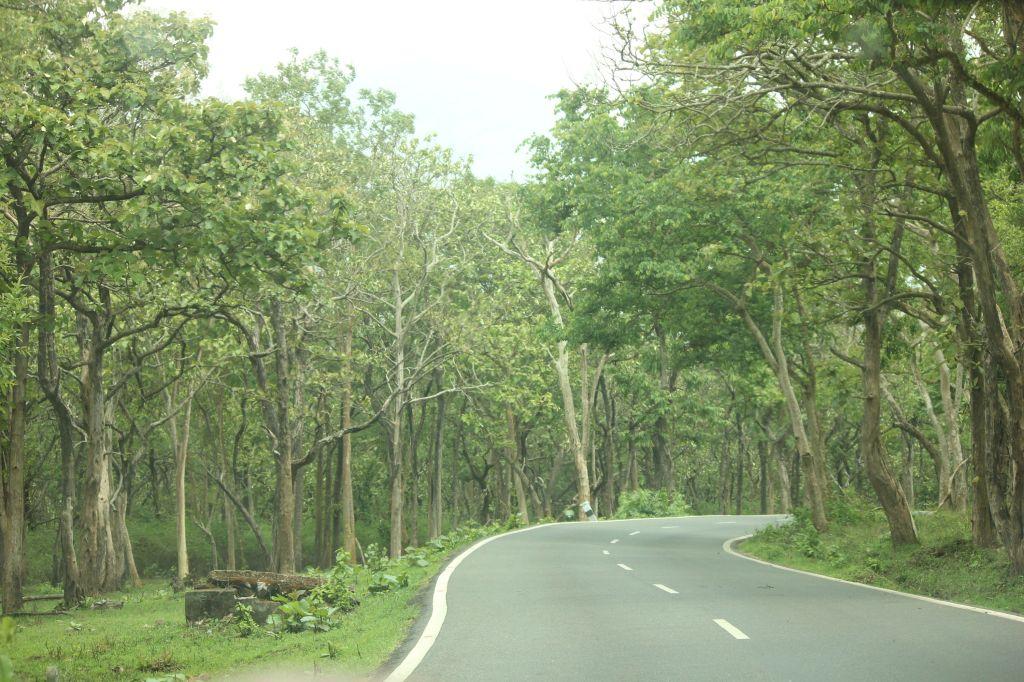 Roads @ Bandipura National Park