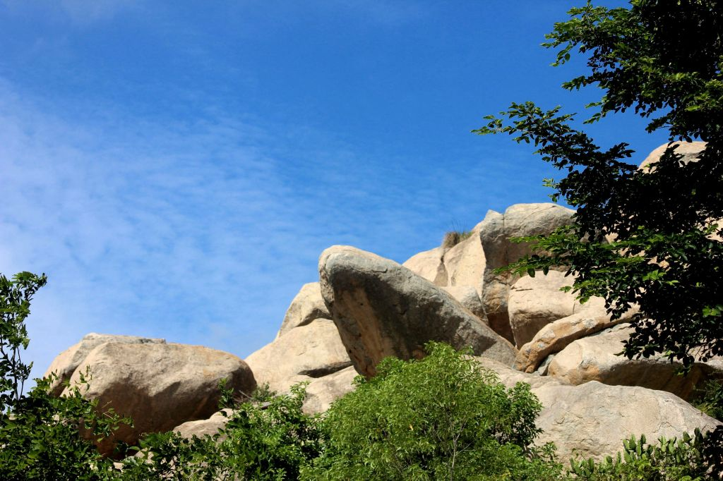 Lion king rock