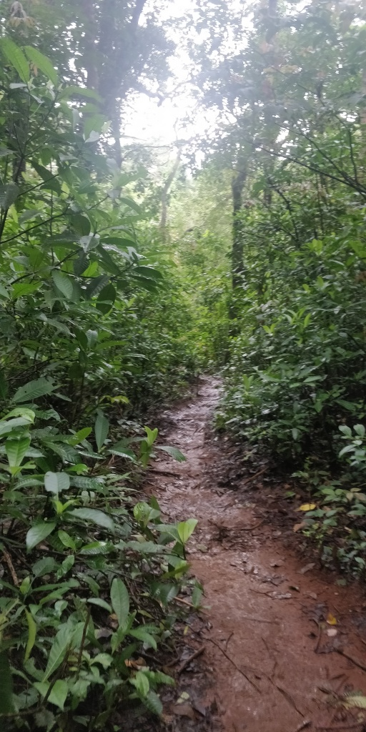 Our trail amidst the thick green vegetation