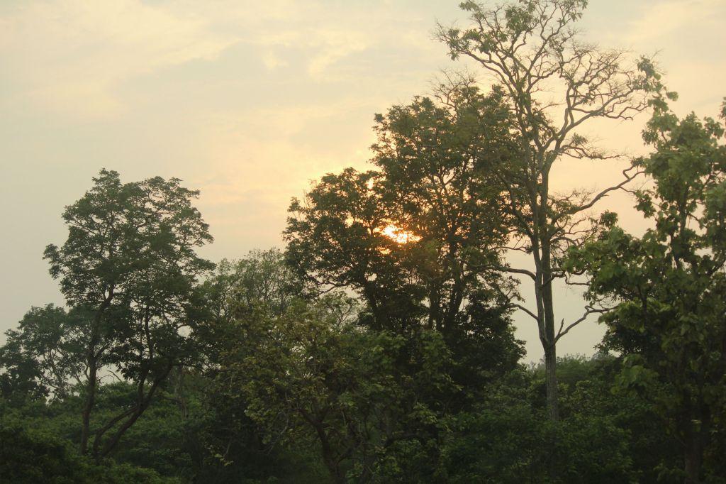 Sunset @ Bandipura National Park