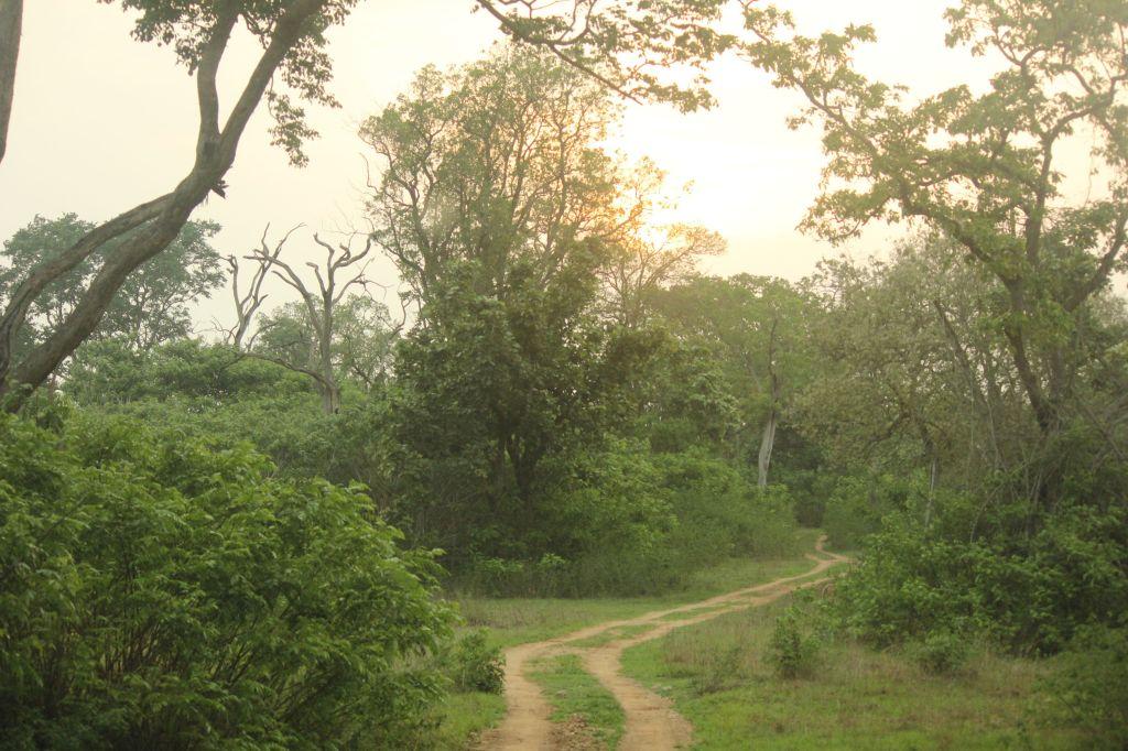 Safari roads @ Bandipura National Park