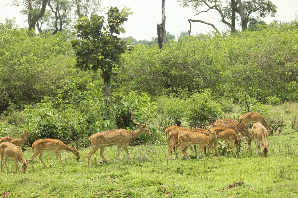 Spotted deer @ Bandipur National Park