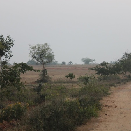 The road into the reserve
