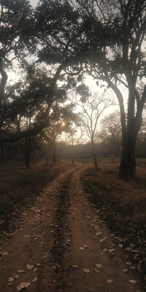 Bandipur Safari Roads